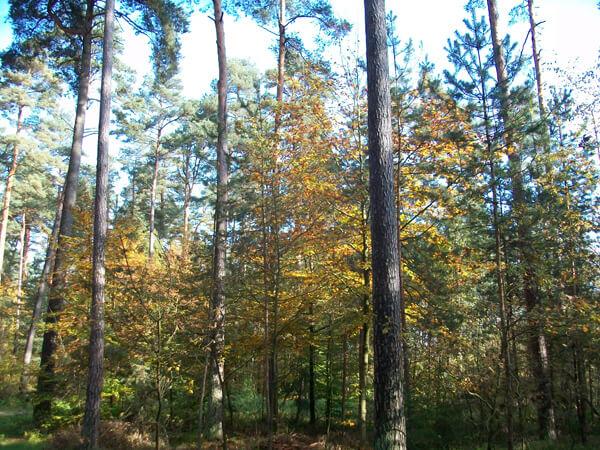 Herbst Im Veitswald